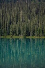 藍色湖泊和綠色樹林圖片