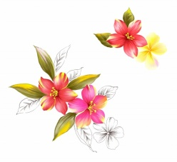 手繪花卉源文件設計素材